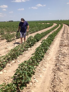 Chris Hunting Cotton Fields