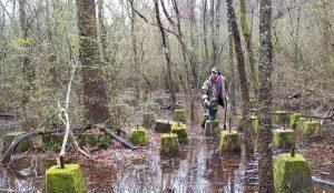 Swampy sawmill hunt